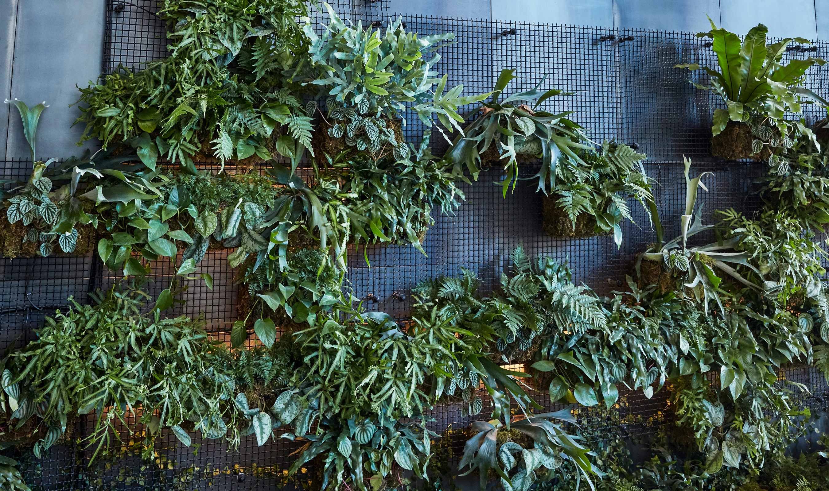 Banker Wire's I-21 woven wire mesh, which is powder-coated in black, helped transform the vertical green wall into a living work of art by providing a grid to affix the welded baskets to