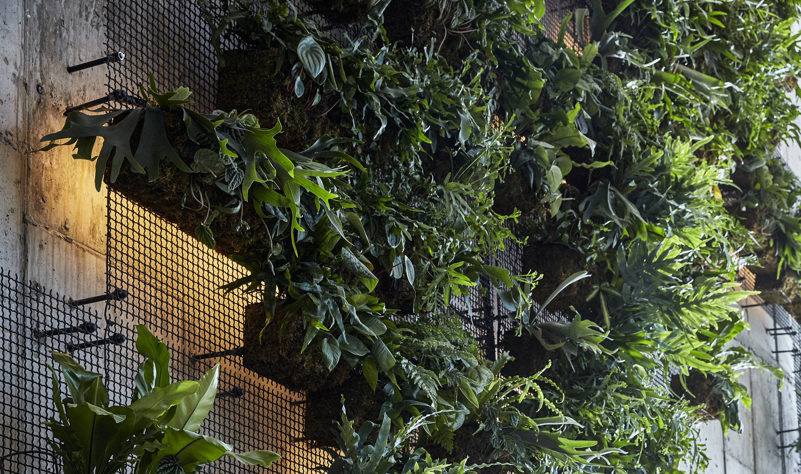A 25-foot, custom green wall in the lobby made from Banker Wire's wire mesh pattern I-21 to create a woven fixture screen and custom welded wire mesh hanging baskets for vegetation.