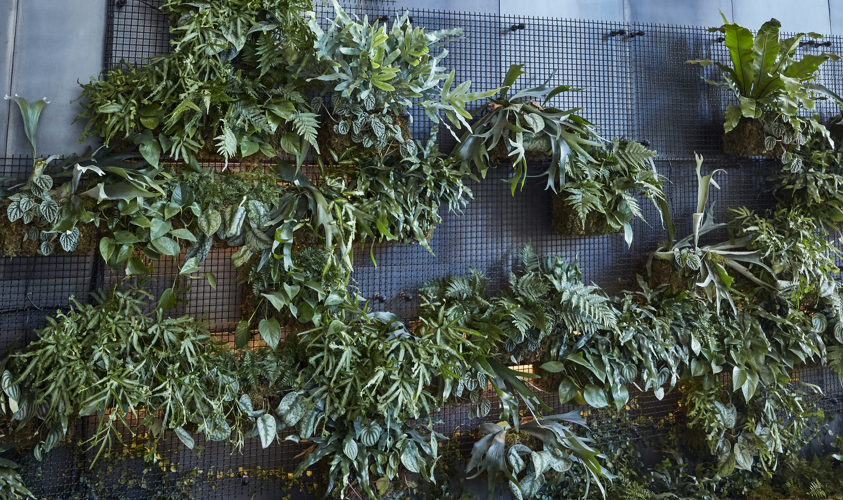 """AgroSci chose the intercrimp motif, commonly seen in urban-inspired window guards and fire escapes, to give the impression that plants were """"reclaiming"""" the location using steel as a main element"""