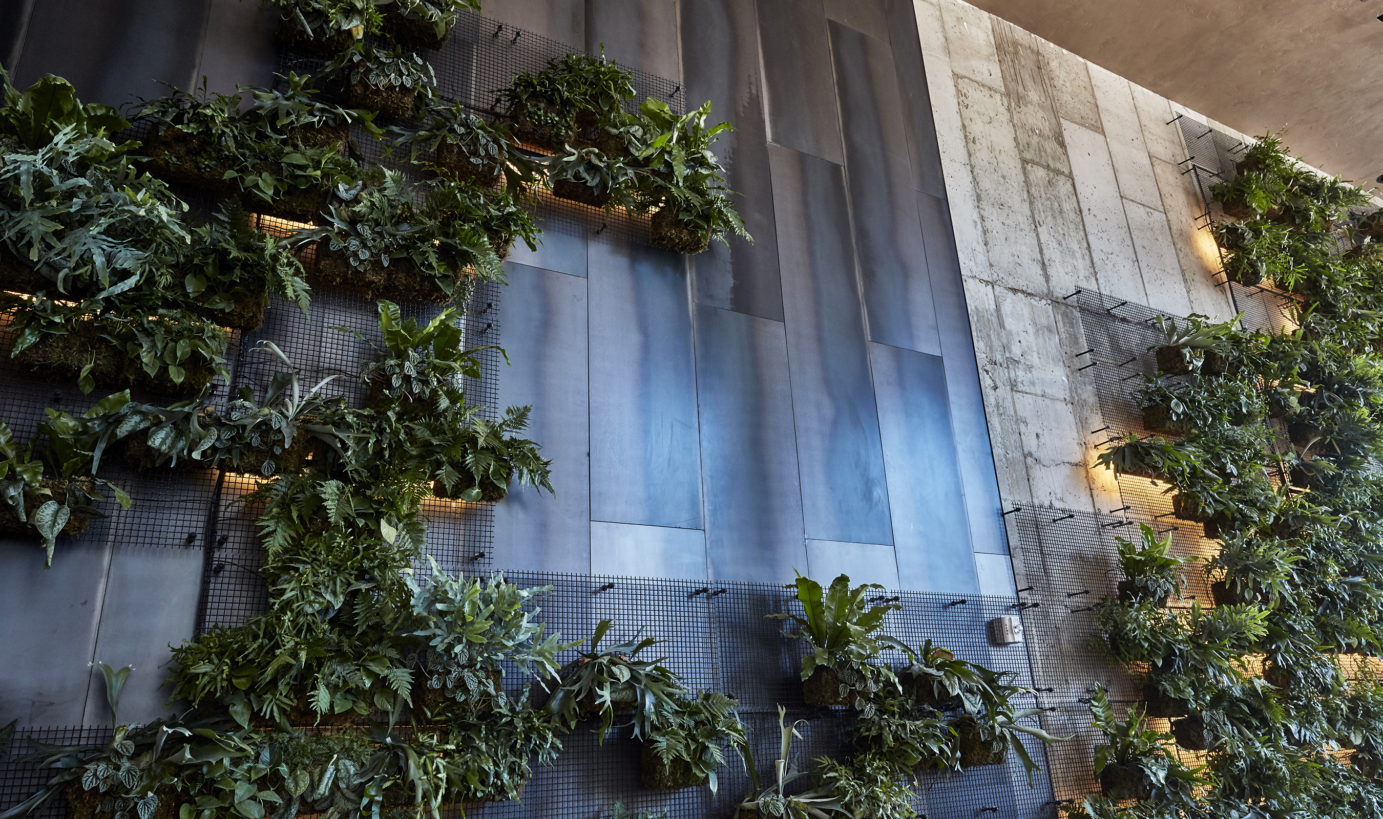 """""""The living wall adds warmth, beauty and nature to the hotel's lobby,"""" said Mark Prescott, president of AgroSci"""