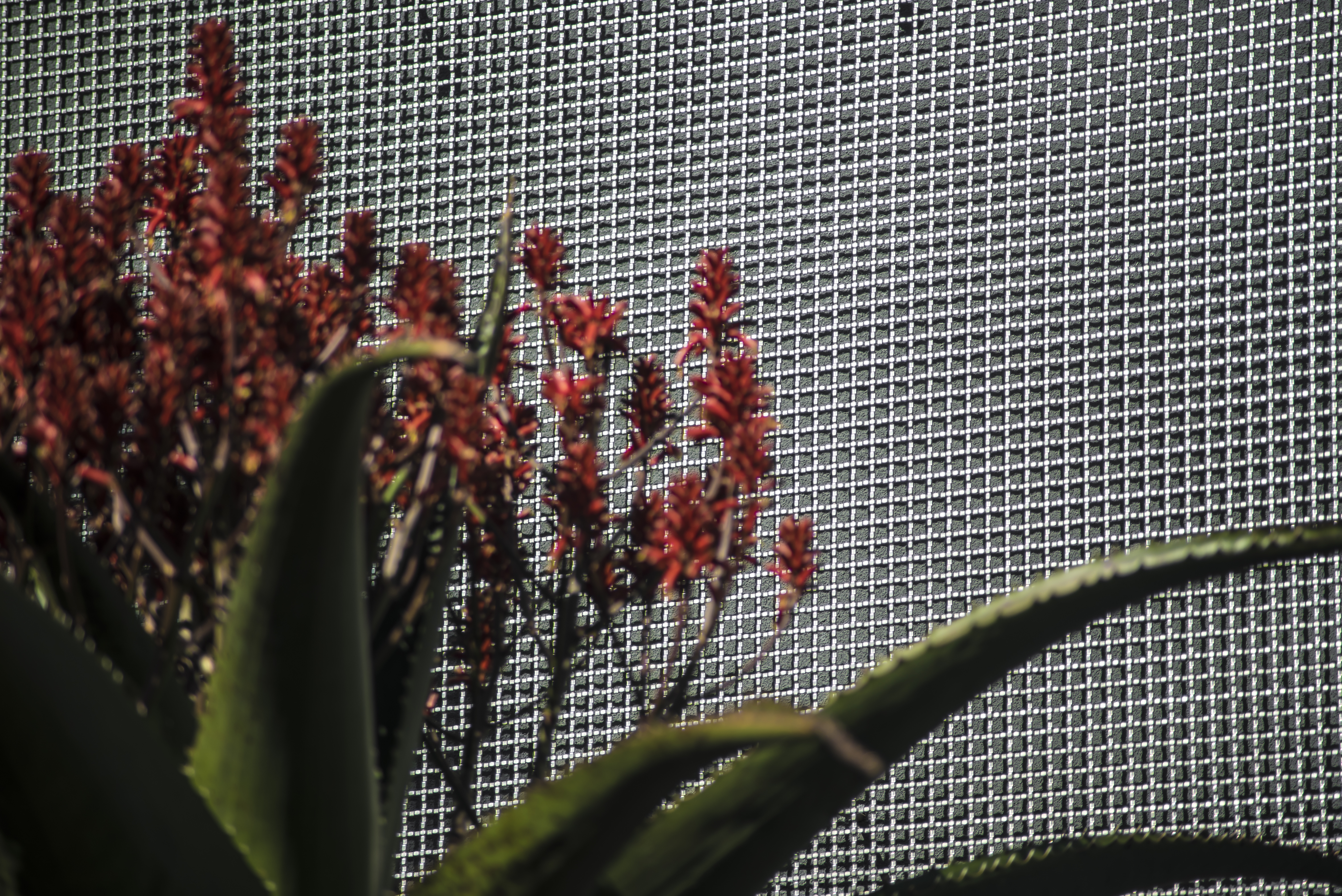 The ephemeral quality of the distinct plants in the entry garden beautifully frame the S-9 wire mesh screen.